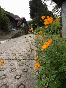 三頭山荘 花_R.JPG