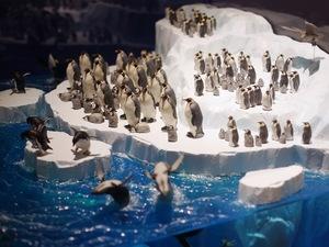 南極3.JPG