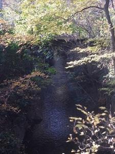 小平中央公園14_R.JPG
