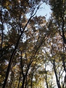 小平中央公園2_R.JPG