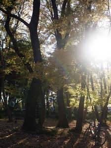 小平中央公園9_R.JPG